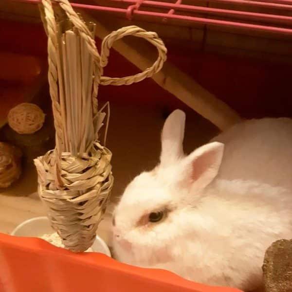Carotte pour lapin en paille Mon Lapin Nain 6