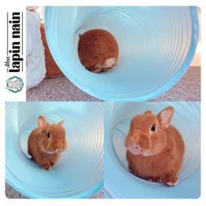 Tunnel pour lapin Mon Lapin Nain 2