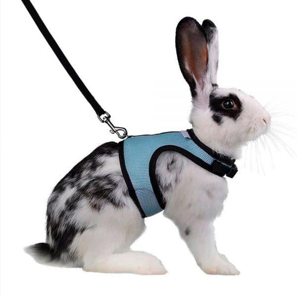 Harnais pour lapin   BunnyBasic™ Mon Lapin Nain 5
