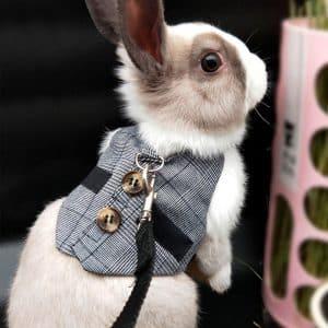 Harnais pour lapin | Gentleman Mon Lapin Nain