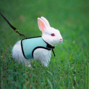 Harnais pour lapin | BunnyBasic™ Mon Lapin Nain