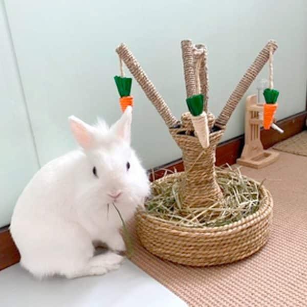Arbre à lapin   Arbre à carottes avec mangeoire à foin Mon Lapin Nain 8