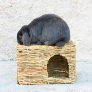 Maison pour lapin en paille Mon Lapin Nain