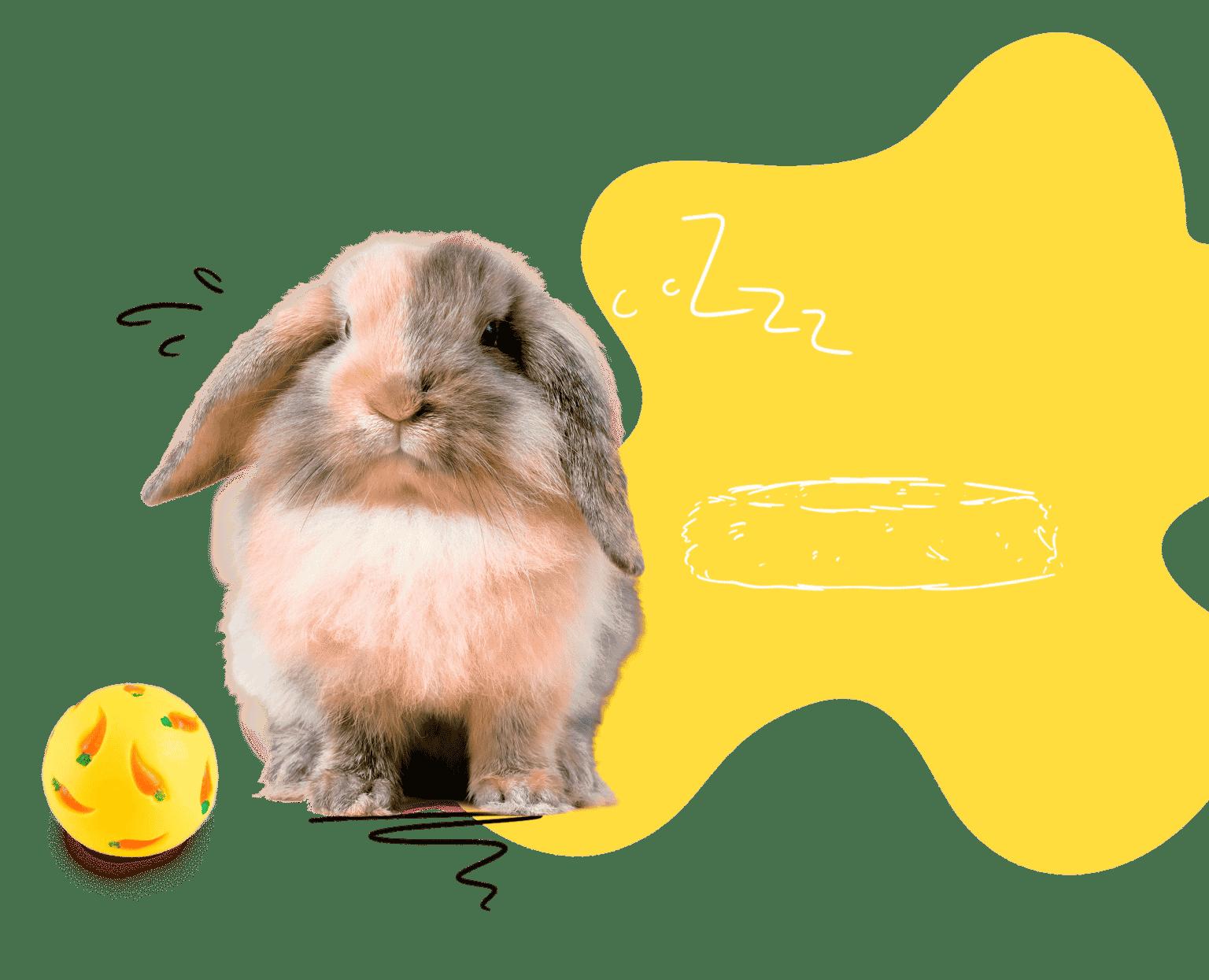 Mon lapin nain boutique pour lapin nain